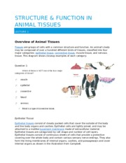 Structure And Function in Animals