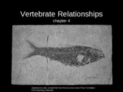 Vertebrate Relationships
