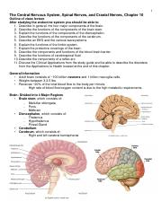 Chapter 10 Central Nervous System, Spinal Nerves, and Cranial Nerves.pdf