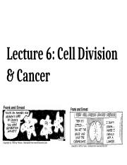 Lecture 6 - Cell Division & Cancer