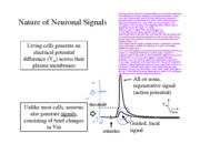 5-Elec Signals Neurons Figs BW