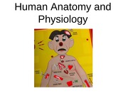 Chapter 6 Human Anatomy and Physiology Powerpoint