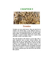 Chapter 9-Termites.