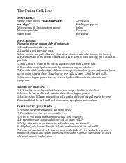 Onion Cell Lab and Conclusion.doc - LAB ONION CELLS ...