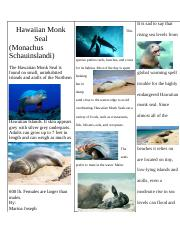 hawaiian monk seal.docx