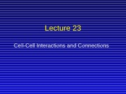 Lecture 23, cell-cell connections and function for class