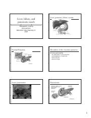 4037 - Liver, Biliary and Pancreatic Needs Lecture - M.Cleary.pdf