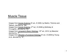 300-05 Muscle Tissue.pdf