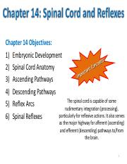 Chapter 14- Spinal Cord & Reflexes