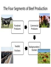 Beef Production.ppt