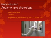 AS 4005 L 15 Reproduction Anatomy and Physiology 2013