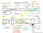 Photo reactions diagram