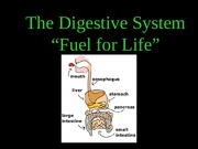 Digestive and Osmo(1)-2.ppt