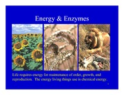 Lecture on Energy & Enzymes