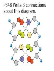 12.2_The_Structure_of_DNA_1.ppt
