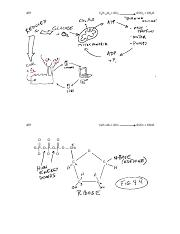 6 Reactions Enzymes S16 (1).pdf