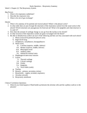 043014-Respiratory_Anatomy_Study_Questions_s2014