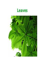Lecture 8 - Leaves(1).ppt