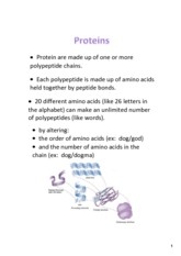 Intro_to_Proteins_Synthesis_Notes