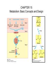 15 Metabolism- Basic Concepts and Design 4 no folate and VitB12.pdf