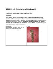 earthworm dissection.docx