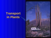 Chapter36 Transport in Plants