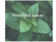 Lecture 14. SPICES & HERBS.ppt