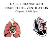 GAS EXCHANGE AND TRANSPORT I