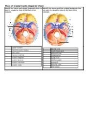 Chapter 7 - Labeling Bone Floor of Cranial Cavity