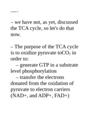 Lecture 14 (TCA, metabolism)