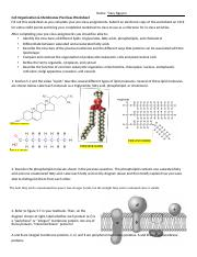 Week 1 Thursday Cells and Membranes Worksheet.docx