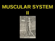 ANP 300 - Lecture 9 - Muscular System II