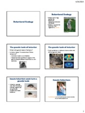Lecture 23 Behavioral Ecology
