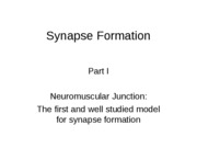 19-Synapse_formation
