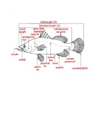parts_of_the_fish