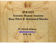 11. abdominal muscle