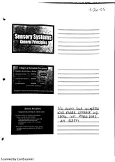 sensory systems general principles
