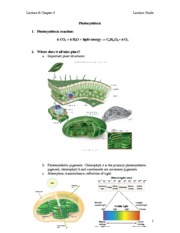 L6photosynthesis_sp14