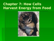 Chapter 7 Lecture - Cellular Respiration