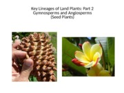 Lecture_5_Plant Diversity II.ppt