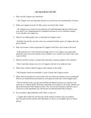 Lab Questions 2.docx