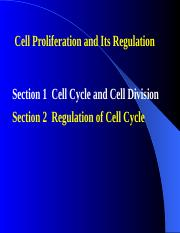 6.cell cycle-division_Section2regulation
