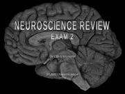 Cindy Montana's neuroanatomy review