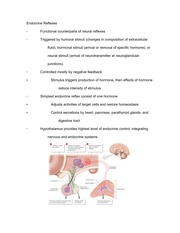 Study Guide for Endocrine Reflexes