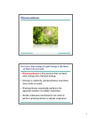 Lecture 13 - Photosynthesis (2).pdf