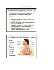 The Respiratory System.docx
