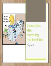 Lecture 14 - Transcription, RNA processing, and translation(1).pdf
