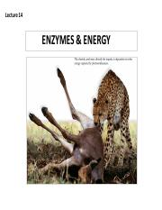 Lecture 14 Energy.pdf