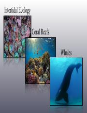 13_Rocky_Intertidal_Corals_Whales.pdf