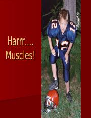 Muscles powerpoint.ppt